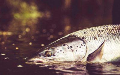 Keepemwet – behandla fisken försiktigt så att den har en chans att överleva när du sätter tillbaka den.