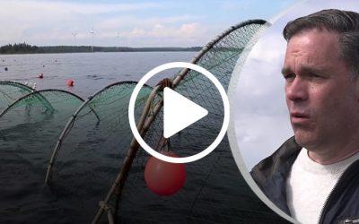 TV4: Östersjölaxen kan räddas i unikt fiskeprojekt